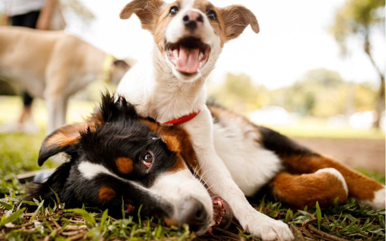 Tips for Socialising your Puppy