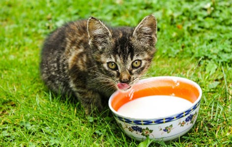 Is it safe for cats and dogs to drink milk?