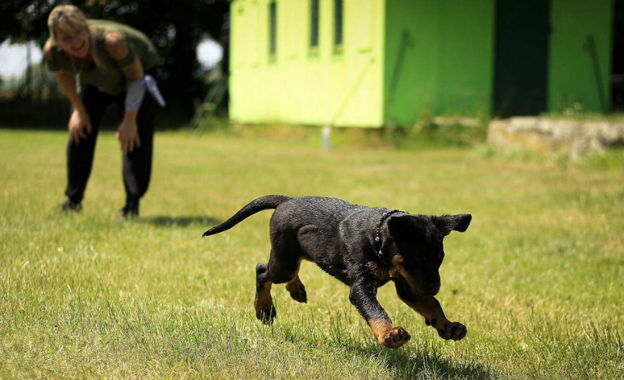 Toys, treats and tummy rubs: Training incentives for your dog