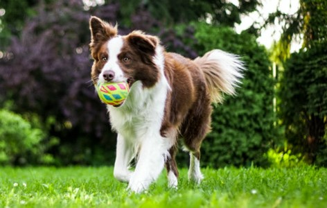 Why your dog responds best to reward training