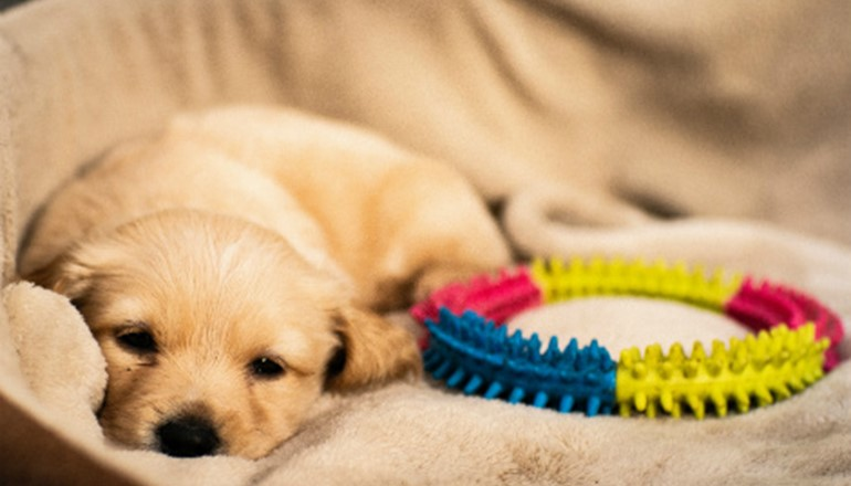 Settling In Your New Puppy - When To Not Disturb Them