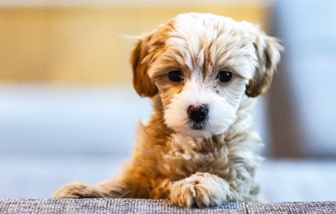 Anxiety About a New Puppy - Why You're Overthinking It