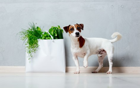 Plants and Other Items that are Harmful to your Dogs
