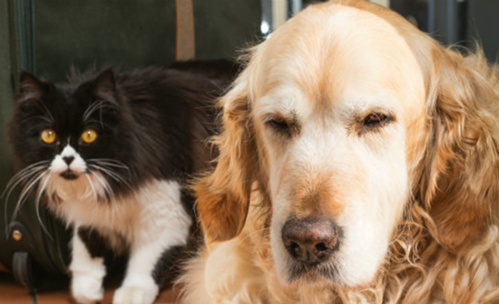 Holidays and Your Pets - How To Manage Changing Routines