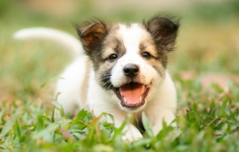 5 Benefits of Getting a Puppy