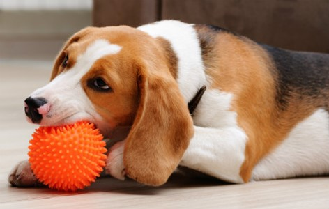 Benefits of Toys for New Puppies