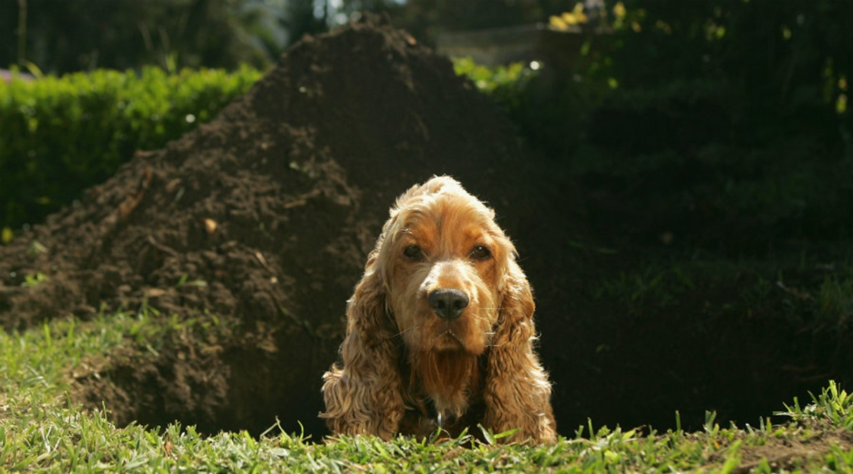 Managing Dog Behavioural Issues