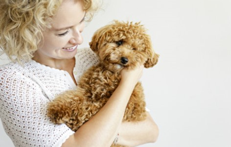 5 Common Questions New Puppy Parents Ask