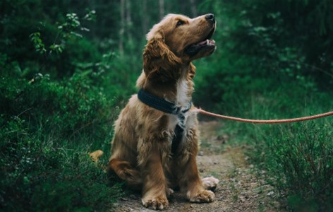 The real-life benefits of training your dog