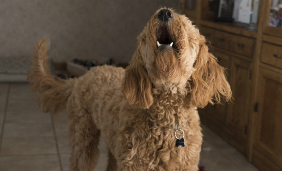 Dogs Behaving Badly - How To Manage A Training Relapse