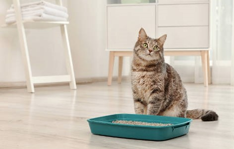 Kitty Litter - What Are The Options?