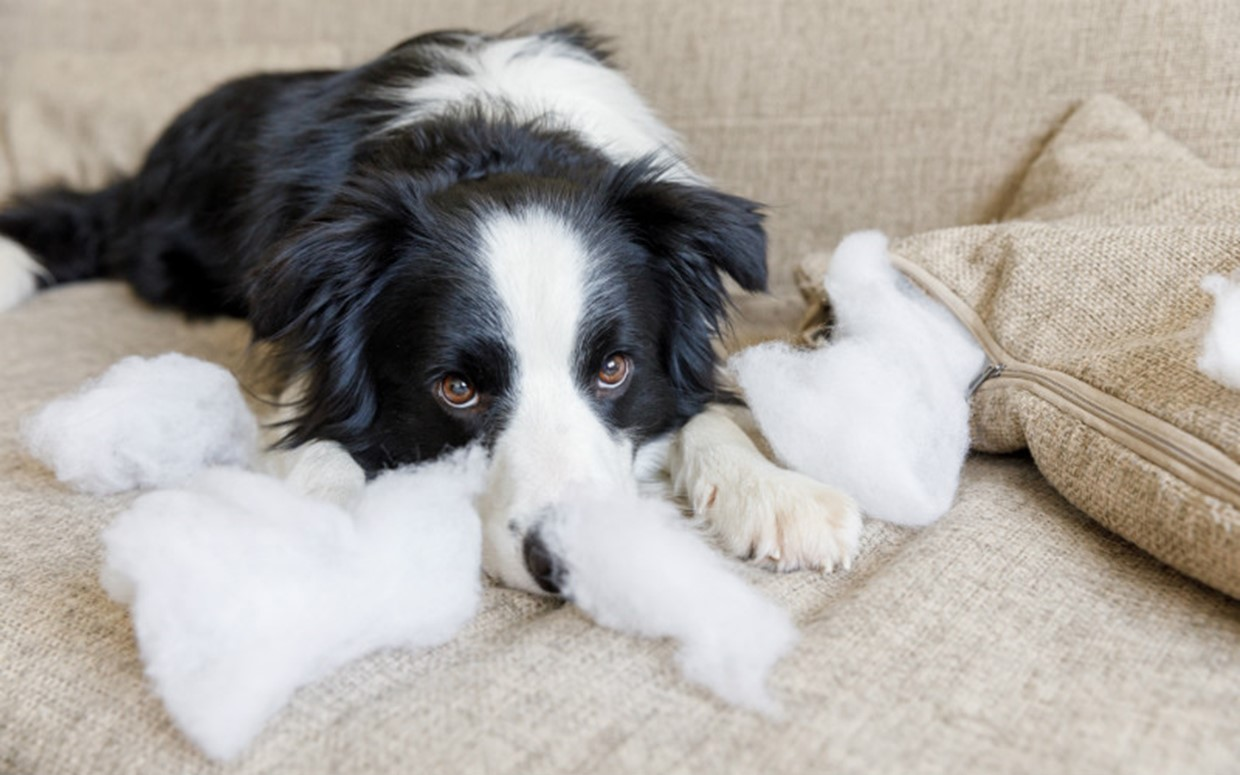 Puppy Separation Anxiety and How to Avoid It