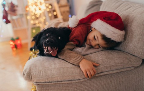 Dog Presents and Including your pup in Christmas