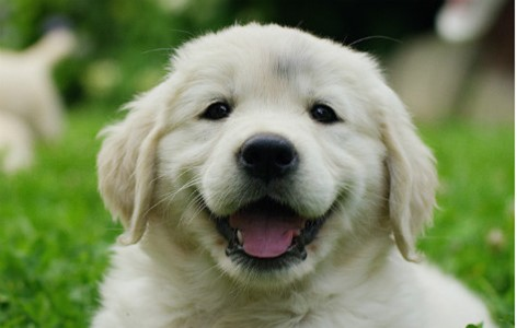 4 Questions to ask before Getting a Puppy